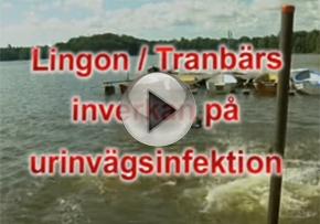 Lingon och tranbärs inverkan på urinvägsinfektion